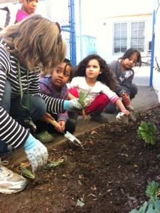 Teachers and students working together in the garden